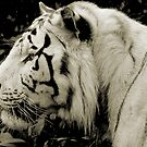 THE WHITE TIGER II by Leny .