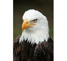 Head of a Bald Eagle Photographic Print