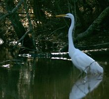 Great Egret by Berk Nash
