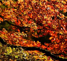 Autumn's Glory by Anne Gilbert