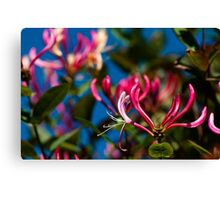 Sky Blue Pink Canvas Print
