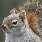 Squirrel Portrait by Martha Medford