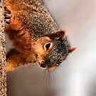 Anti Gravity Squirrel by Keala