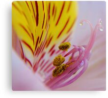 Lovely as a Lily Canvas Print