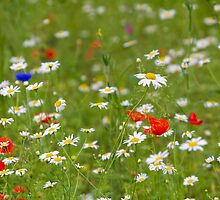 Wildflower meadow by chris2766