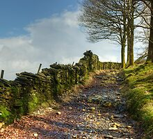 Out Of Yewdale by VoluntaryRanger