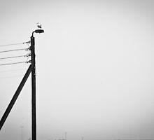 Seagull on a Pole by Witold Skrzypiński