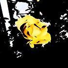 Retro Rose Yellow by notanangel81