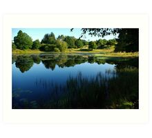 Small lake surrounded by trees Art Print