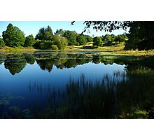 Small lake surrounded by trees Photographic Print