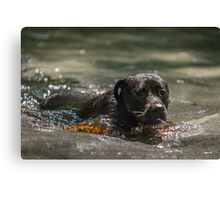 Swimming in Coca Cola Canvas Print