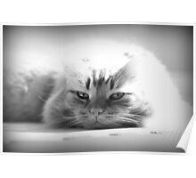 Feline Rest Poster