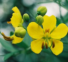 Two Yellow Flowers by Emily Rose