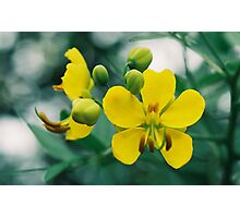 Two Yellow Flowers Photographic Print