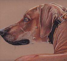 Rhodesian Ridgeback by Charlotte Yealey