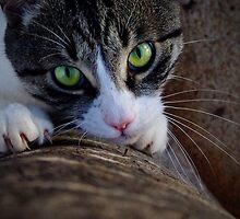 Dangerous Eyes by Penny Kittel