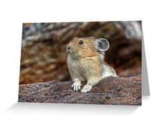 Rock Rabbit Greeting Card