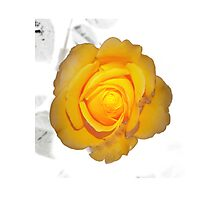 """Spot on"" yellow rose  Photographic Print"