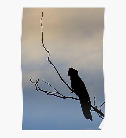Black Cockatoo silhouette Poster