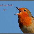 Robin Redbreast A Little Bird Told Me Message by taiche