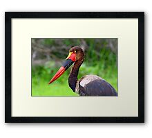 Saddle Bill Stork Framed Print
