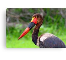 Saddle Bill Stork Canvas Print