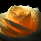 Amber Rose by Vitta
