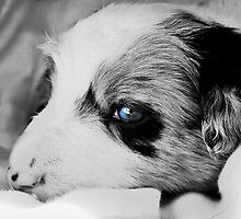 Blue Eye Pup by dedakota