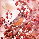 Robin Amoung Red Berries In Winter by daphsam