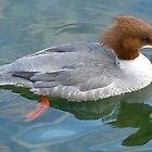 MADAME GOOSANDER by Marilyn Grimble
