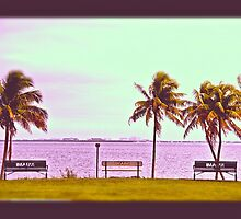 Seaside Palms by MeghanKathryn