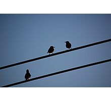 NYC Starlings Photographic Print