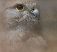 Australian kestrel by Jan Pudney