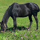 Black Horse by teresa731