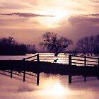 Doggone Flooding by flag-photos