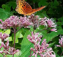 Butterfly on Pink Weeds by teresa731