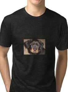 Adorable Rottweiler Puppy Making Eye Contact Tri-blend T-Shirt