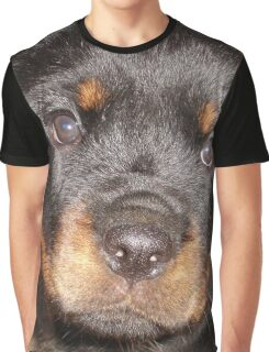 Adorable Rottweiler Puppy Making Eye Contact Graphic T-Shirt