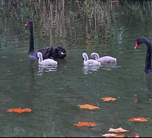 A Family Outing by Larry Lingard-Davis