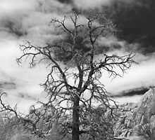 The Lonely Ent by jpatterson
