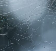 Spider Web Up Close and Personal by Belle Farley