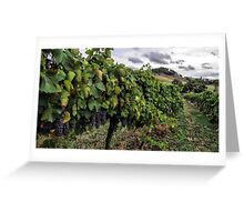 Mudgee Vineyard Greeting Card