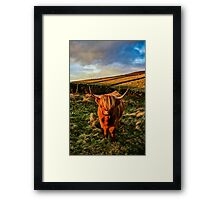 Highland Cow in the Peak District Framed Print