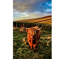 Highland Cow in the Peak District Photographic Print
