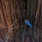 Blue Bird of Happiness by Loree McComb