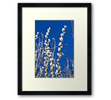 Willow - Catkins Framed Print