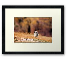 Fluffball Watching Framed Print