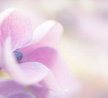 Pink Cloud by Anne Gilbert
