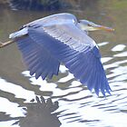 Heron in Flight by Rob Parsons
