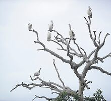 Pelicans' Tree by Loriene Perera